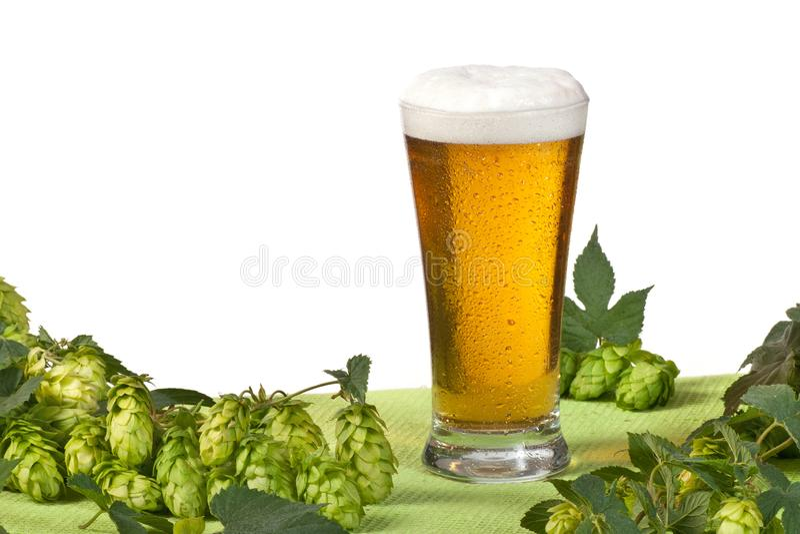 Vetro di birra e del luppolo fotografia stock