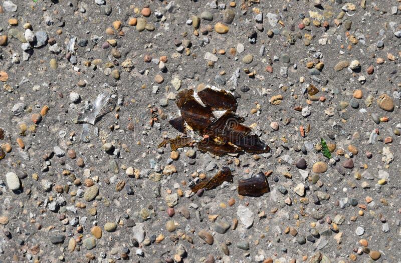 Vetro di Brown della bottiglia rotta su asfalto immagine stock libera da diritti