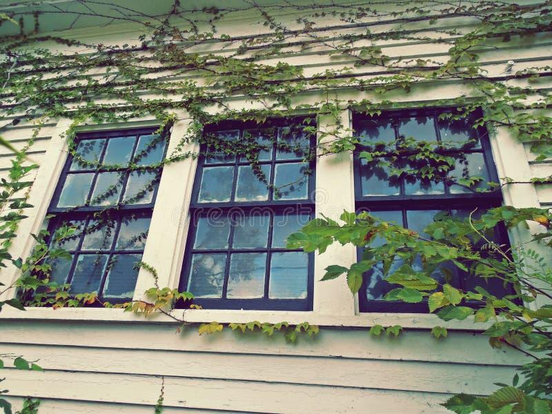 Vetro di finestra chiuso 3 leggermente coperto di viti verdi al giorno fotografia stock libera da diritti