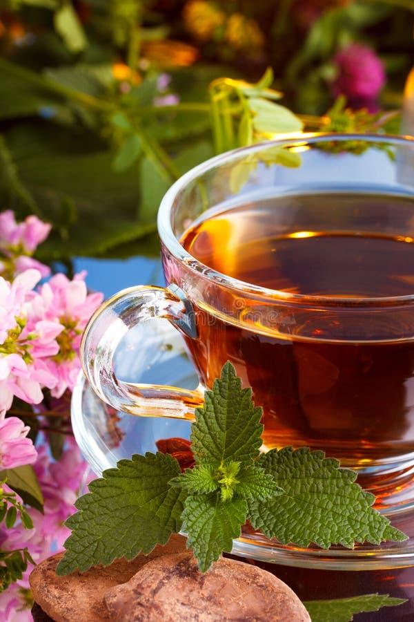 Vetro di tè con la menta ed il cacao immagini stock