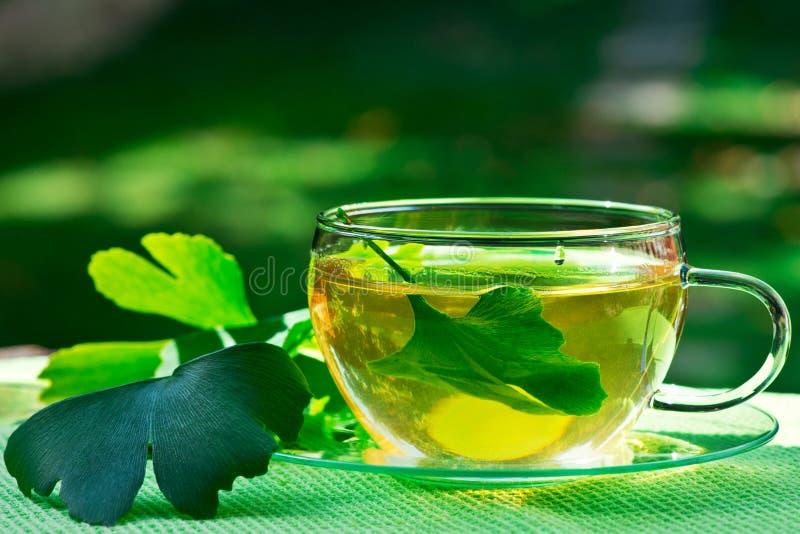 Vetro di tè erbaceo con il ginkgo fotografia stock