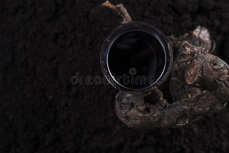 Vetro di vino rosso con la vite in un fondo nero immagine stock libera da diritti