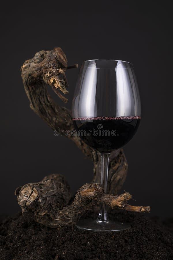 Vetro di vino rosso con la vite in un fondo nero fotografie stock libere da diritti