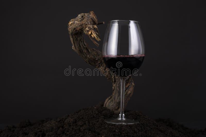 Vetro di vino rosso con la vite in un fondo nero fotografia stock libera da diritti