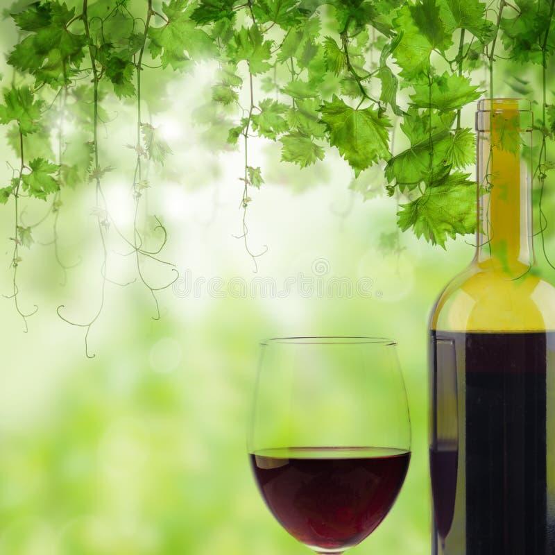 Vetro e bottiglia di vino rosso in vigna sul fondo verde della vigna fotografia stock