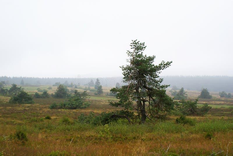 Vetta nuvolosa. fotografia stock