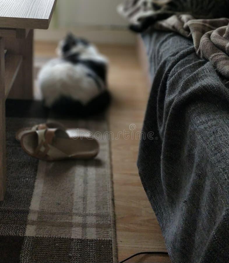 Vette mooie kat, royalty-vrije stock afbeeldingen