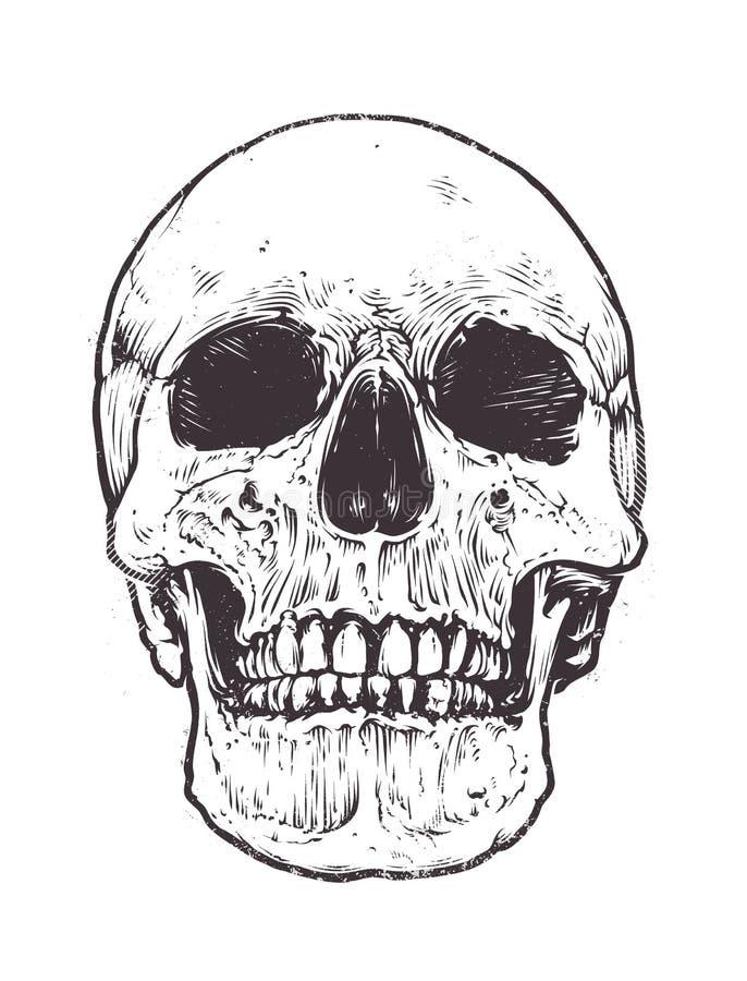 Vettore anatomico del cranio illustrazione di stock