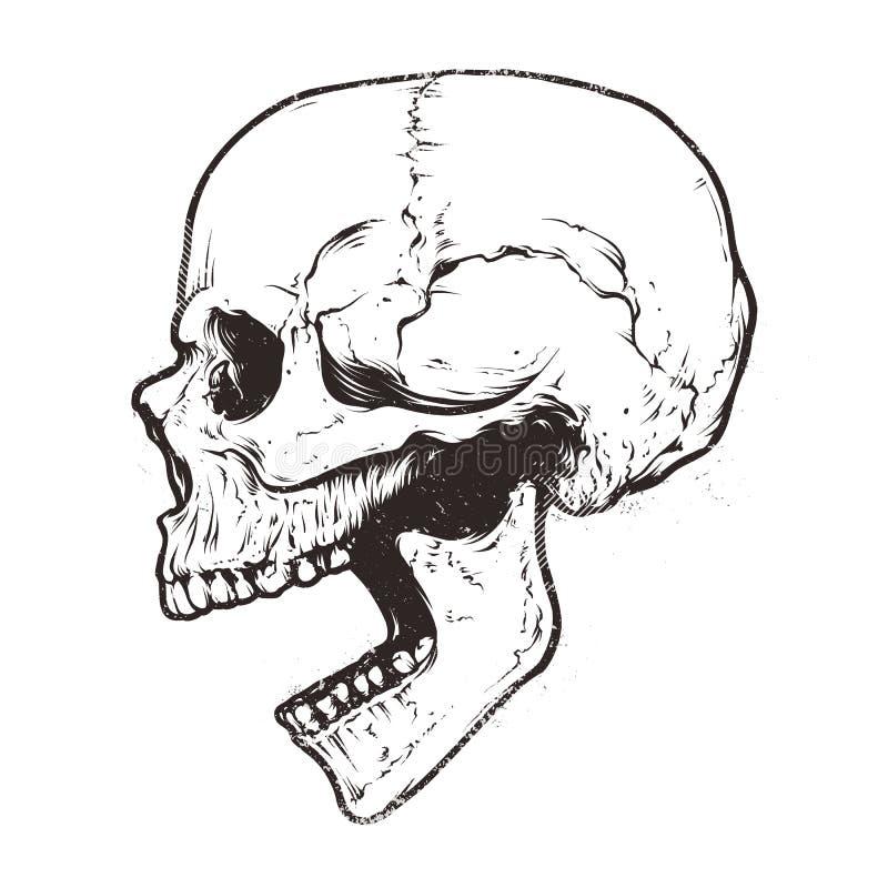 Vettore anatomico del cranio illustrazione vettoriale