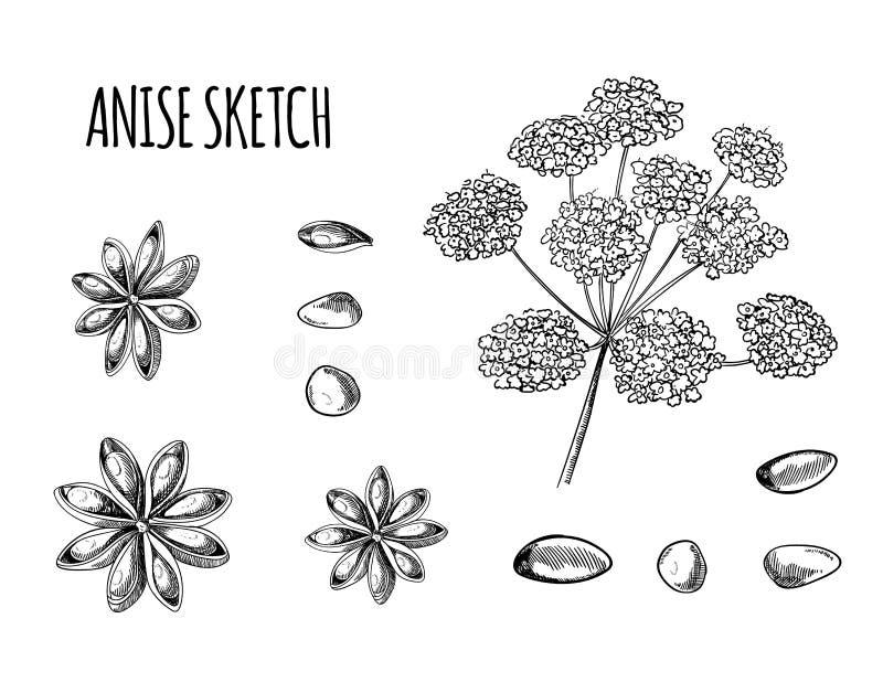 Vettore Anise Sketch, illustrazione disegnata a mano isolata, disegni della pianta di profilo neri illustrazione vettoriale