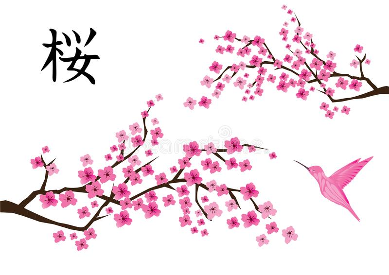 Vettore Cherry Blossom With Pink Hummingbird royalty illustrazione gratis
