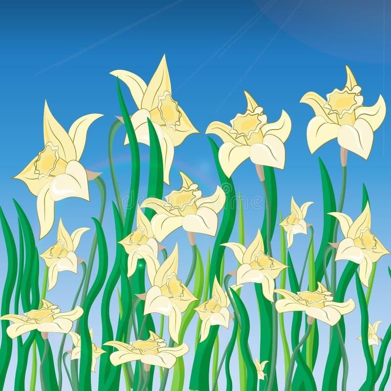 Vettore dei fiori del narciso sul fondo della molla royalty illustrazione gratis