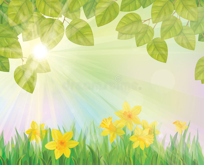 Vettore dei fiori del narciso sul fondo della molla. royalty illustrazione gratis