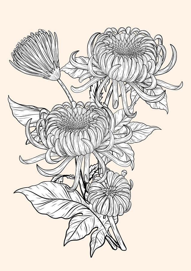 Vettore del crisantemo su fondo marrone royalty illustrazione gratis