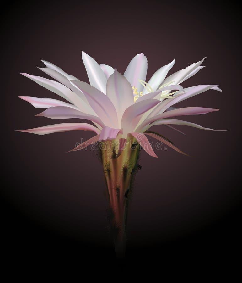 VETTORE del fiore del cactus illustrazione di stock