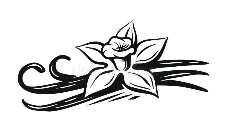 Vettore del fiore della vaniglia royalty illustrazione gratis