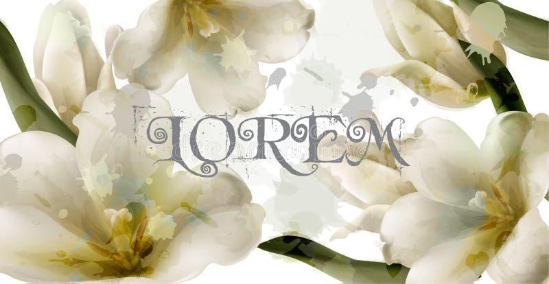 Vettore del fondo dei fiori dell'acquerello del giglio Bella decorazione della molla Mazzo delicato Cartolina d'auguri o partecip illustrazione di stock