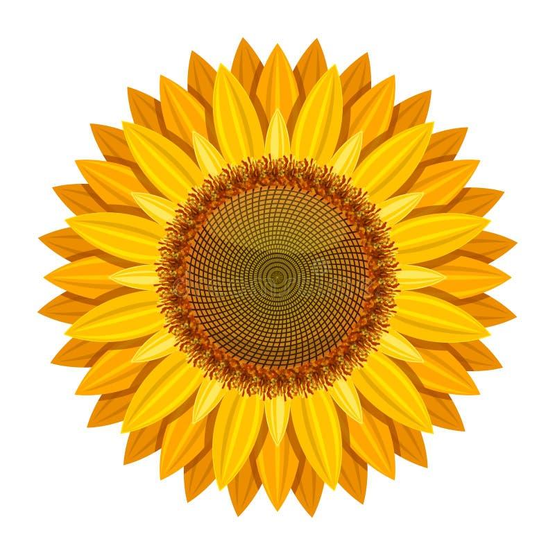 Vettore del girasole su fondo bianco Fiore giallo del sole illustrazione vettoriale