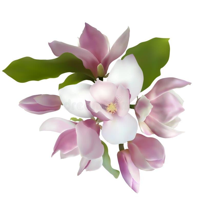 Vettore del mazzo della magnolia illustrazione di stock