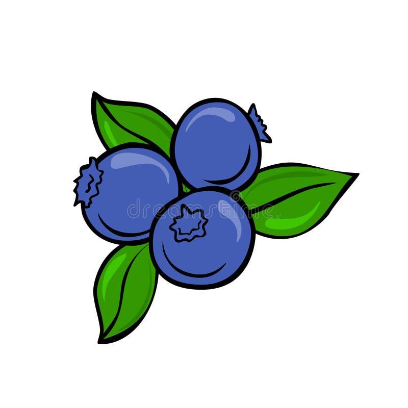 Vettore del mirtillo isolato su fondo bianco Illustrazione della frutta illustrazione di stock