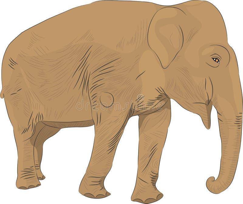 Vettore dell'elefante indiano illustrazione di stock