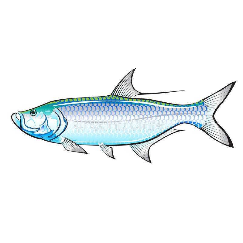 Vettore dell'illustrazione dei Gamefish dell'oceano del tarpone royalty illustrazione gratis