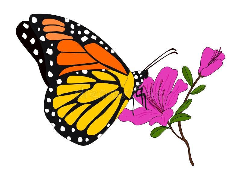 Vettore dell'illustrazione della farfalla di monarca della farfalla illustrazione di stock