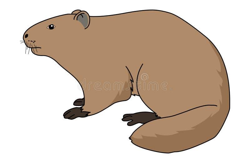 Vettore dell'illustrazione della marmotta Fumetto Groundhog royalty illustrazione gratis