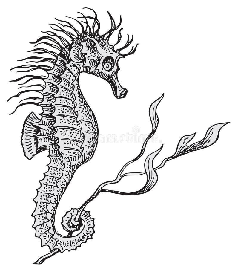 Vettore dell'ippocampo illustrazione di stock