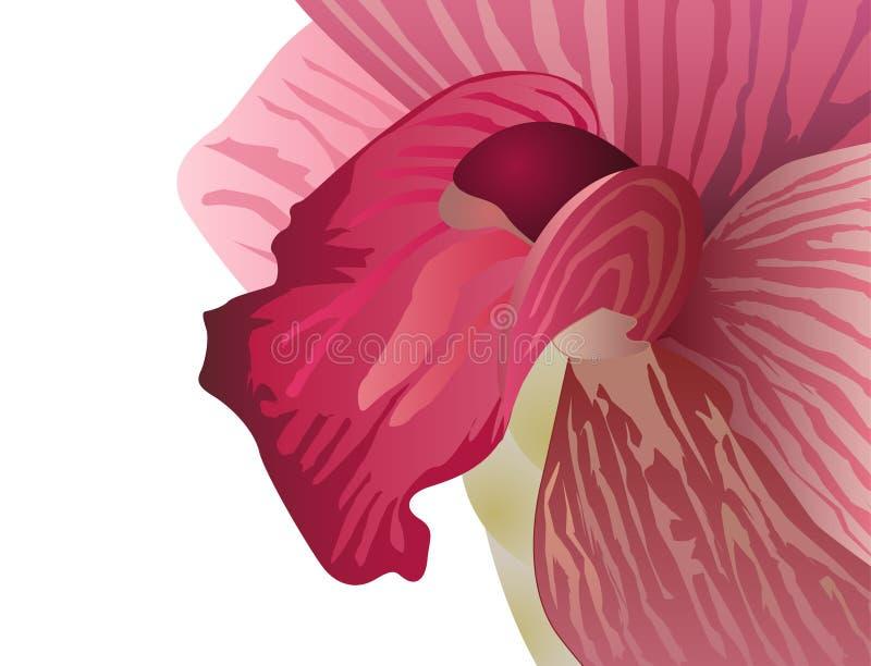 Vettore dell'orchidea royalty illustrazione gratis