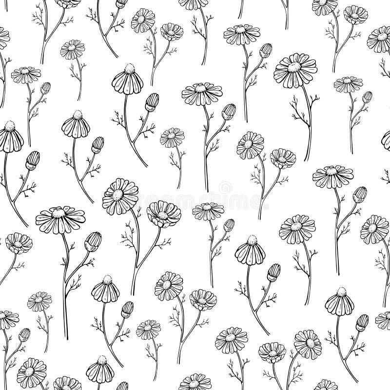 Vettore della camomilla che disegna modello senza cuciture Fiore selvaggio della margherita e fondo isolati delle foglie Di erbe  royalty illustrazione gratis