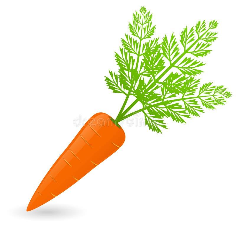 Vettore della carota isolato illustrazione di stock