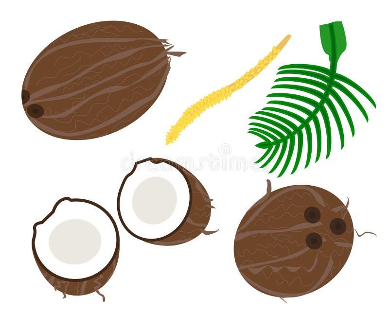 Vettore della noce di cocco royalty illustrazione gratis