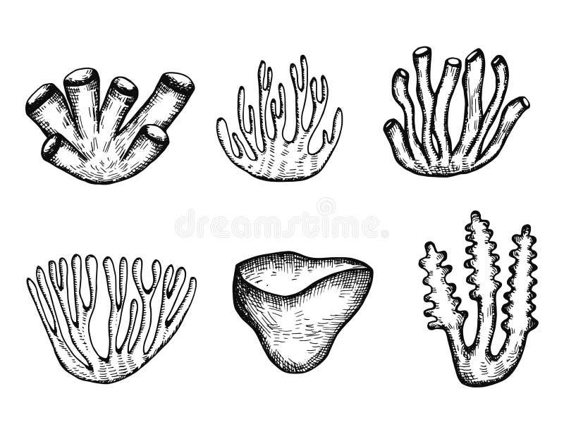 Vettore della siluetta del corallo e dell'alga Insieme isolato illustrazione vettoriale