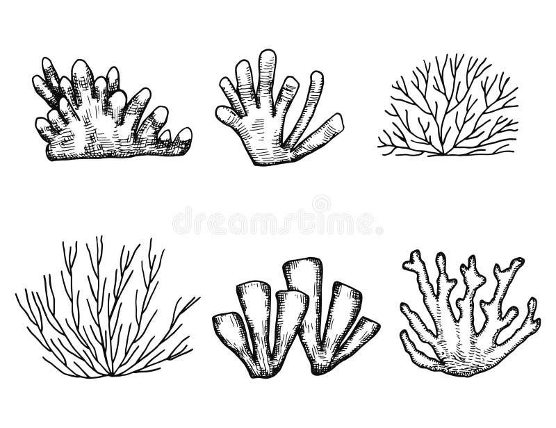 Vettore della siluetta dell'alga Insieme isolato illustrazione di stock