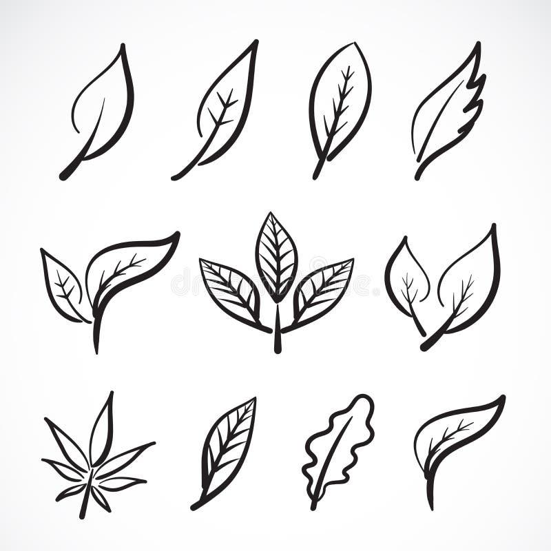 Vettore delle foglie disegnate a mano isolate su fondo bianco foglie del gruppo Illustrazione stratificata editabile facile di ve illustrazione vettoriale