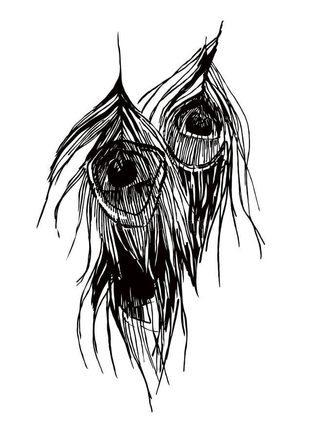 Vettore delle piume del pavone illustrazione vettoriale