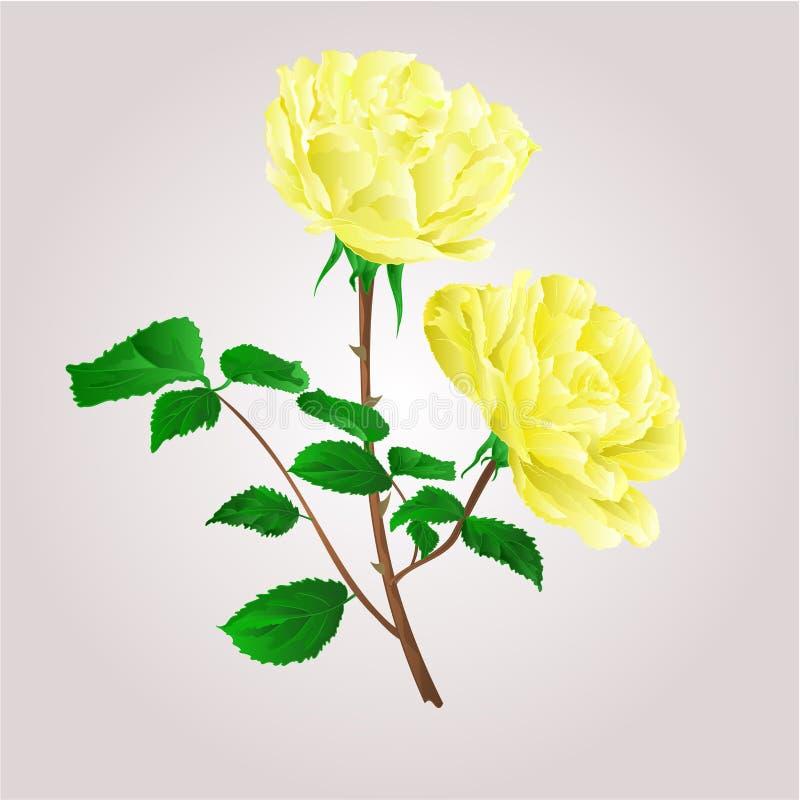 Vettore delle rose gialle del ramoscello royalty illustrazione gratis