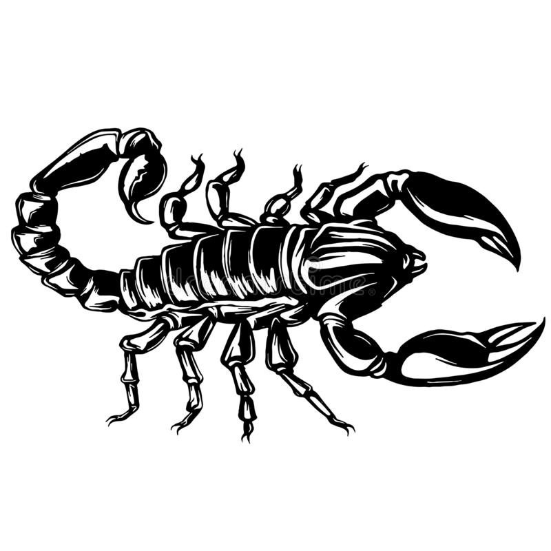 Vettore di un'illustrazione dello scorpione su fondo isolato illustrazione di stock