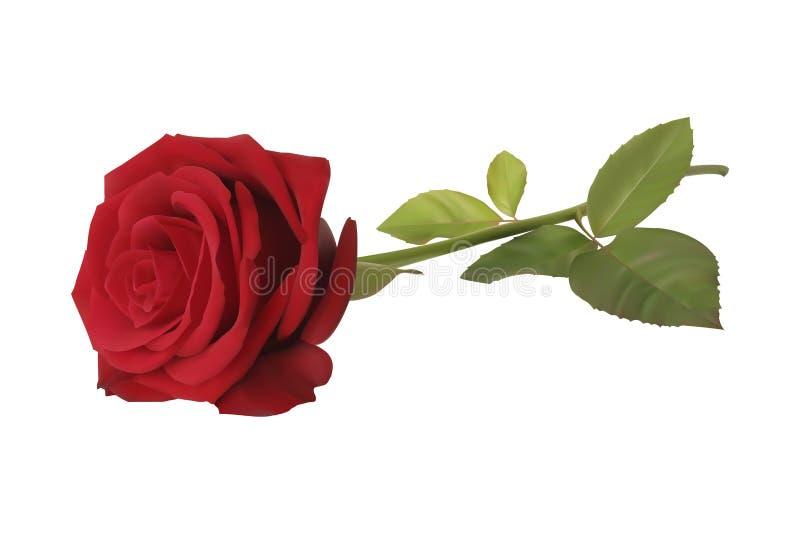 Rosa rossa illustrazione vettoriale