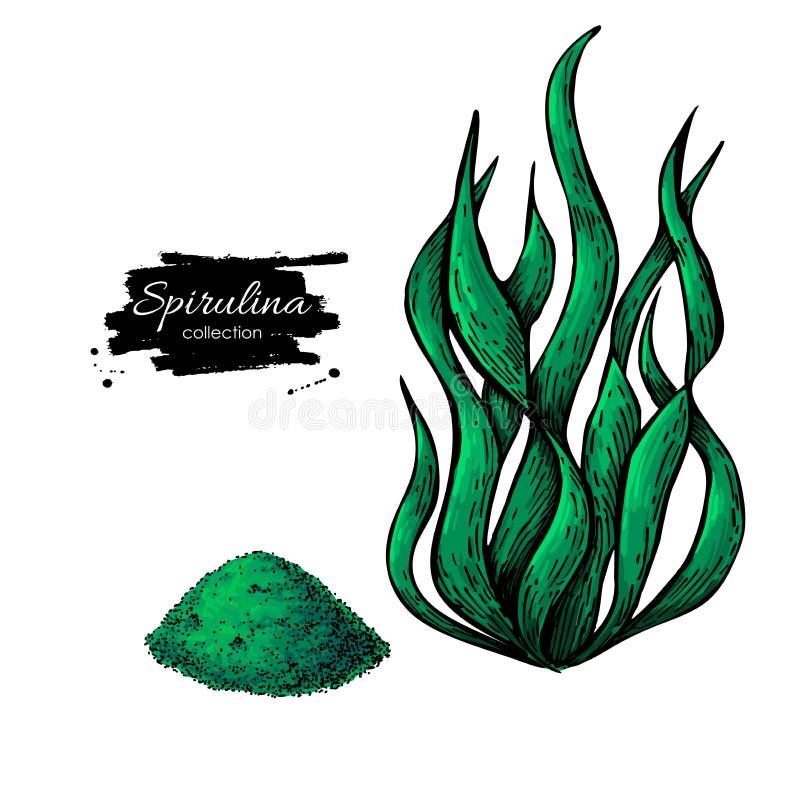 Vettore disegnato a mano della polvere dell'alga di Spirulina Alghe e polvere isolate di Spirulina royalty illustrazione gratis