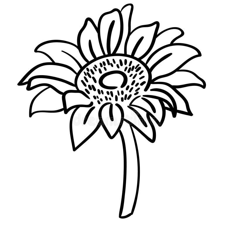 Vettore ENV, disegnato a mano, vettore, ENV, logo, icona, illustrazione del girasole della siluetta dai crafteroks per gli usi di illustrazione vettoriale
