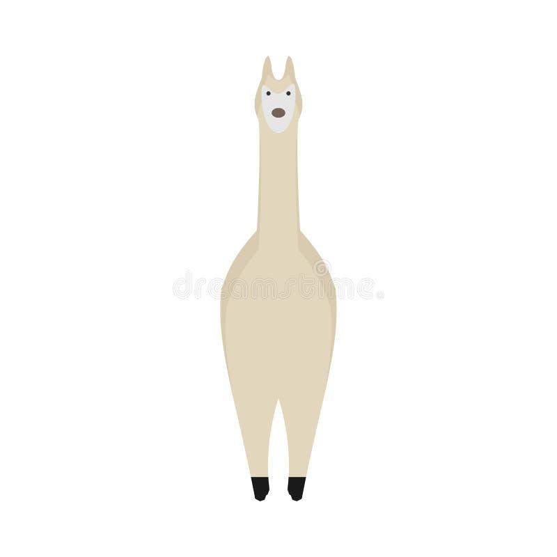Vettore felice dell'animale domestico della fauna selvatica del mammifero della natura del lama Vista frontale del ritratto di ma royalty illustrazione gratis