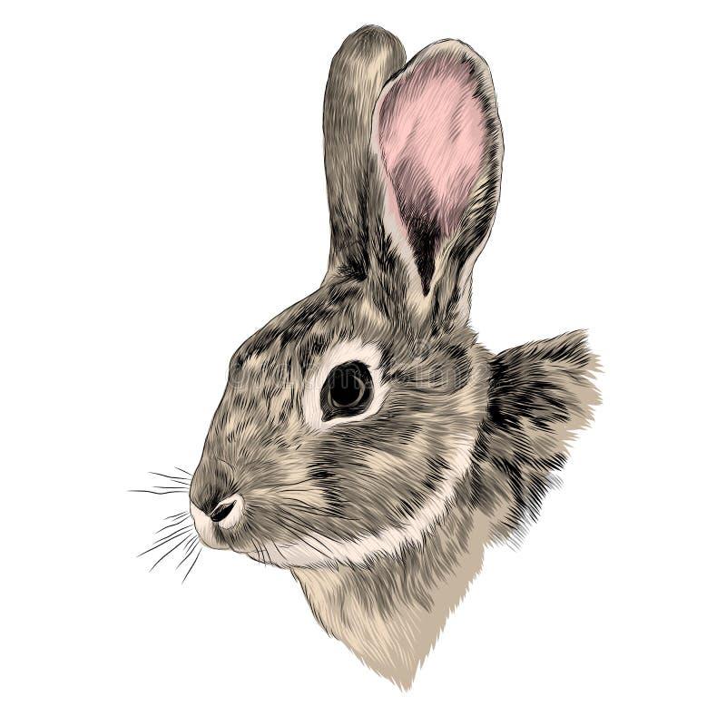 Vettore grigio capo di schizzo del coniglio illustrazione vettoriale