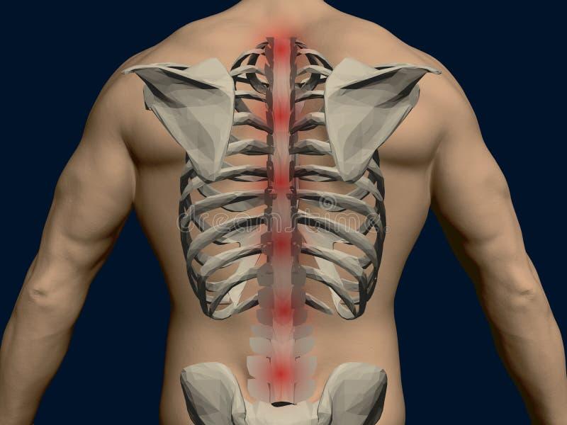 Vettore indietro di un uomo con uno scheletro Punti irritati rossi lungo la spina dorsale 3d Parte posteriore realistica di un uo illustrazione di stock