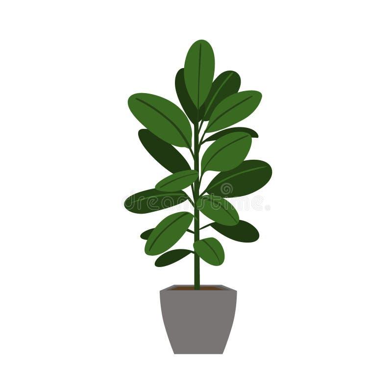 Vettore isolato dell'interno dell'albero di gomma della pianta da appartamento illustrazione di stock