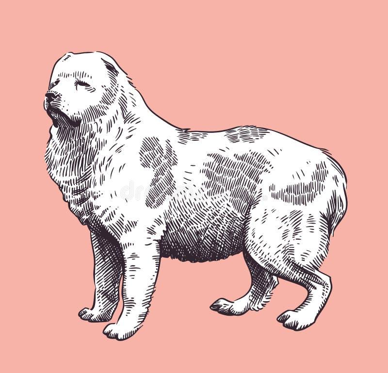 Vettore Metà di-Asiatico caucasico del pastore del cane royalty illustrazione gratis