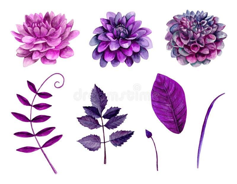 Vettore porpora dei fiori dell'acquerello illustrazione di stock