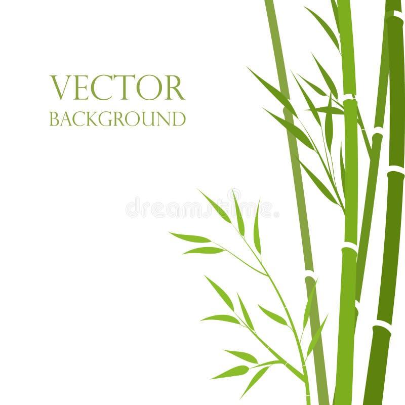 Vettore, steli di bambù stile astratto su sfondo bianco Sfondo esotico Sfondo dei giardini, orzo immagine stock libera da diritti