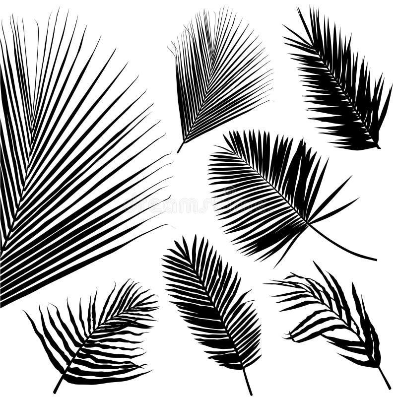 Vettore tropicale del foglio illustrazione vettoriale